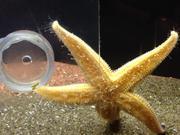 Mira el vídeo gratis de Aquarium Life 6
