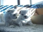 Watch free video Sweet Dogs Puppies - Ohh They are So Cute
