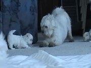 צפו בסרטון מצויר בחינם Sweet Dogs Puppies - Ohh They are So Cute