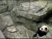 Watch free video Smithsonian's National Zoo: Panda