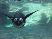 Watch free video Aquarium Life 5