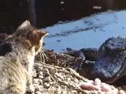 شاهد كارتون مجانا Cat vs. Alligator