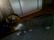 Watch free video Funny Cat Part 3