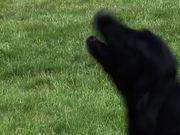 Watch free video Dogs Singing Happy Birthday