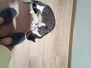 Funny Cat Part 1