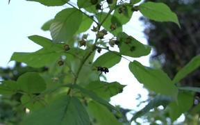 A Bee Pollinates A Plant