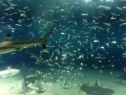 Watch free video Feeding Fishes