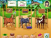Horse Care Apprenticeships game