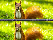 Squirrel Difference game