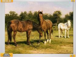 Horses Grazing Jigsaw game