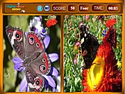 Butterfly Similarities game