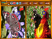 Play Butterfly similarities game Game