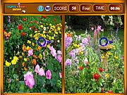 Flowers Similarities game
