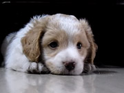 Watch free cartoon Cute Puppy at Home