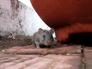 Watch free cartoon A hungry mouse at Hussain Sagar
