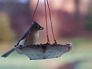 Watch free cartoon Birds and Feeder in Macro View