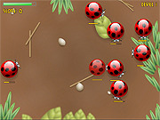 Spider Bugs game